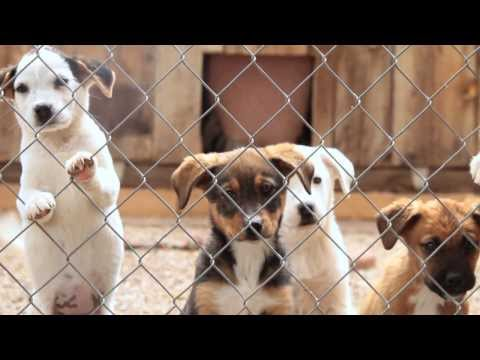 SAVE THE MCKINLEY COUNTY HUMANE SOCIETY, GALLUP, NM