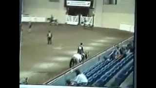 All Hands On Zip -- Multiple World Champion Appaloosa Stallion view on youtube.com tube online.