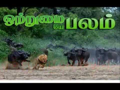 Best Sri Lanka Anthem in TAMIL with countdown  - இலிங்கம் නීල් Armstrong