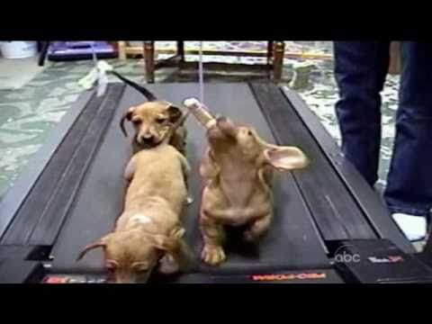 Cute Dogs (Americas Funniest Home Videos / AFV), http://outch.org/ Funny and cute dogs collection from AFV.