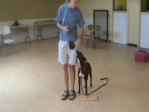 Heeling: Dog Training Tips from Villa La PAWS