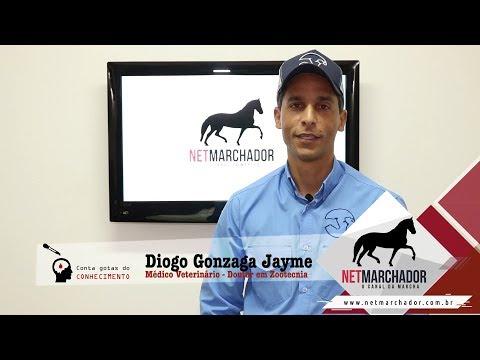 #1 - CONTA GOTAS DO CONHECIMENTO - DIOGO GONZAGA JAYME - MANGALARGA MARCHADOR