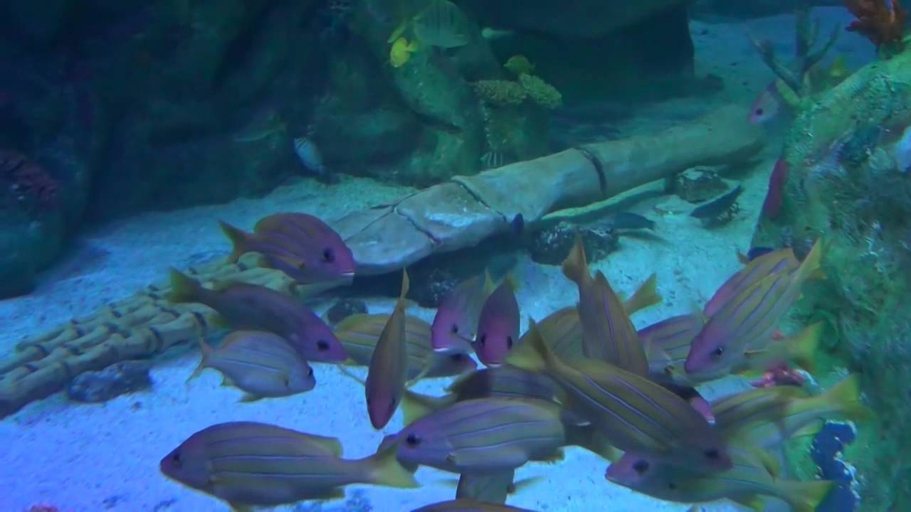 Sea Life Aquarium At Arizona Mills Mall Youtube