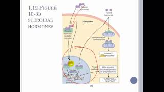Chapter 10 The Endocrine System Part 1