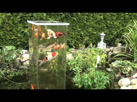 Teich aussichtsturm gruppe oo aquarium videos oo for Aquarium fische im gartenteich