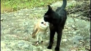 Bayku� ile Kedinin Dostlu�u