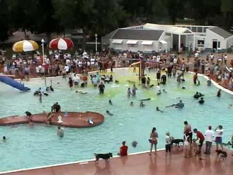 Oι σκύλοι κολυμπούν..