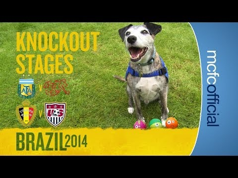 DOUGIE THE DOG PREDICTS   Argentina & Belgium World Cup Predictions