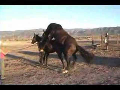 Donkey Mating vedio | just b.CAUSE