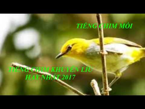 Tiếng chim mồi - Tiếng chim khuyên mồi hay 2017 \