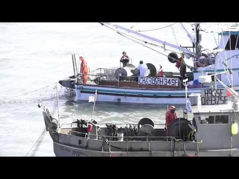 Herring Fishing 2013
