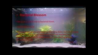 Cloudy heart just movin 39 on videos de cloudy for Cloudy fish tank water in established tank