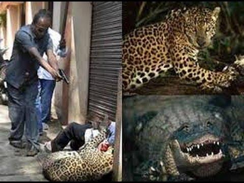 Động vật tấn công con người
