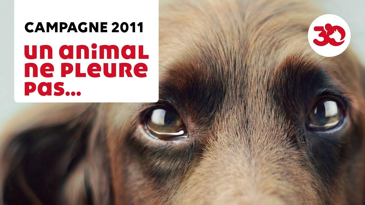 Un animal ne pleure pas... Il souffre en silence - YouTube