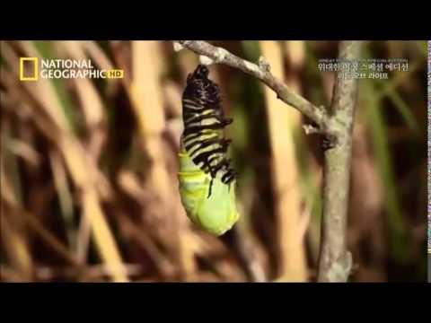 Sự hình thành của một Chú Bướm xinh đẹp (Cửa lưới chống muỗi Quang Minh)