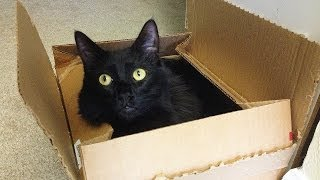 [Why Do Cats Love Boxes?] Video
