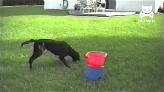 Dog Loves Automatic Ball Launcher