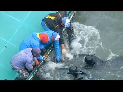 Japanese dolphin killing condemned by US ambassador