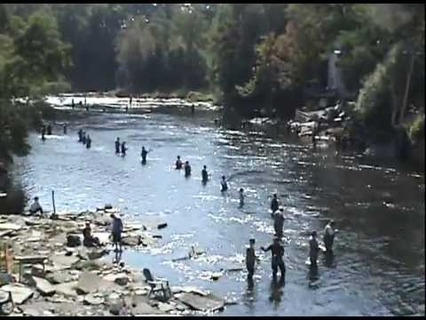 Salmon river pulaski ny with music by jerry cali youtube for Salmon river ny fishing regulations