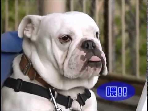Phim hài Nhật Bản - Chó & Khỉ thông minh phần 1 - Tập 16 [HD]