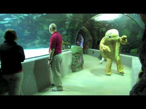 Virginia Aquarium Harlem Shake