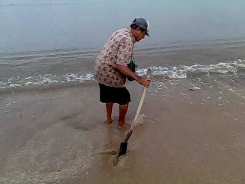 CARI UMPAN TEPI PANTAI (Cacing Laut)