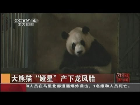 Panda twins born at zoo in China