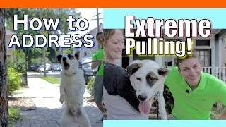 How To Train Your Dog To NOT PULL On A Leash! EXTREME