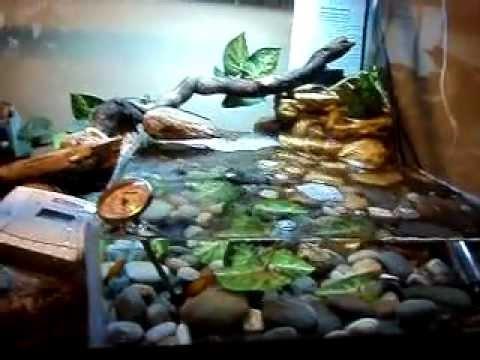 Crocodile skink cage setup - photo#10