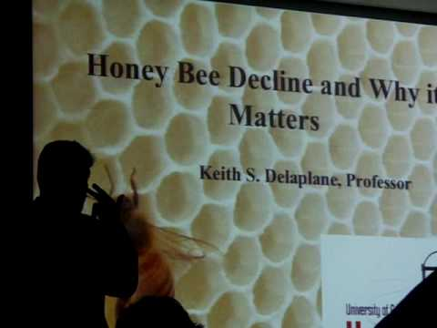 CCD,2of4,Keith Delaplane,Beekeeping colony collapse disorder,Israeli accute virus