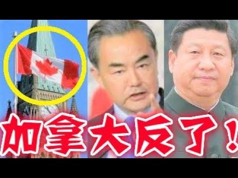 就在剛剛!加拿大下令制裁習近平中共!王毅夫人被拒入境!紅二代習明澤抓狂