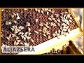 White House beekeper humming to new strains..