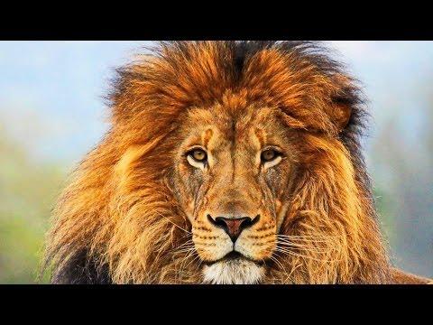 Национальный парк Серенгети _ Serengeti (2011