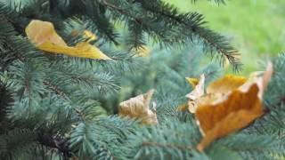 ХНУВС восени