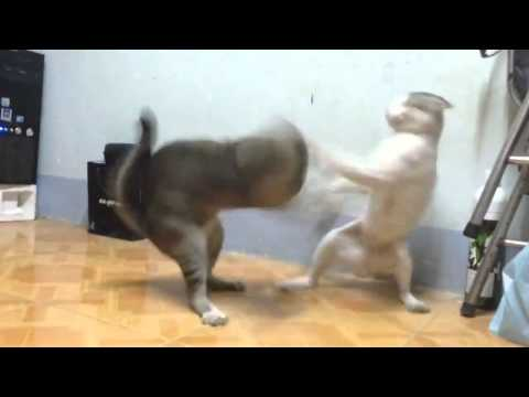 72 Tuyệt Kỹ Thiếu Lâm - Kungfu Mèo