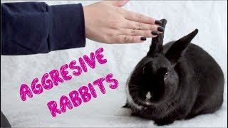 How to Bond With an Aggressive Rabbit