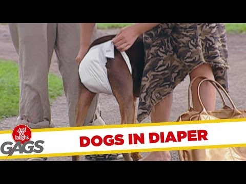 Throwback Thursday: Dog in Diaper Prank
