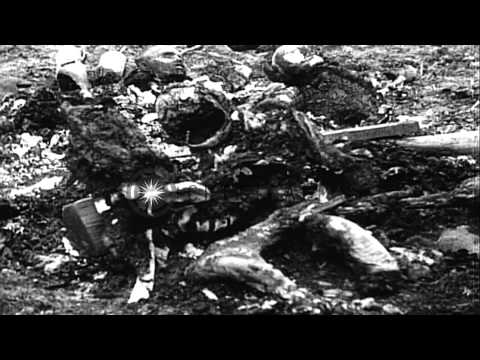 Nazi atrocities at the Auschwitz Concentration Camp in Poland. HD Stock Footage