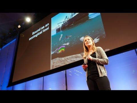 How giant sea creatures eat tiny sea creatures - Kelly Benoit-Bird