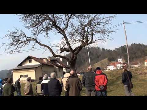 Obrezovanje visokodebelnih dreves Šentjanž 14. 3. 2015