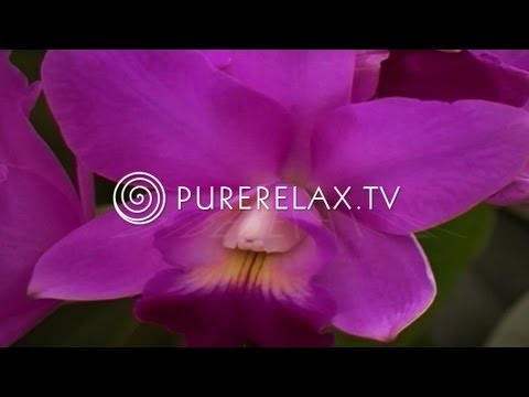 Nature Video - Wellness Sounds, Spa, Regeneration & Paradise - RAINFOREST IMPRESSIONS