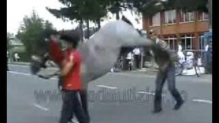 Noqueado por caballo