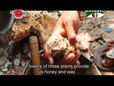 Nature and Life   Episode 144 (Plants of Economic Importance)