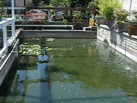 for Koi pond swimming pool