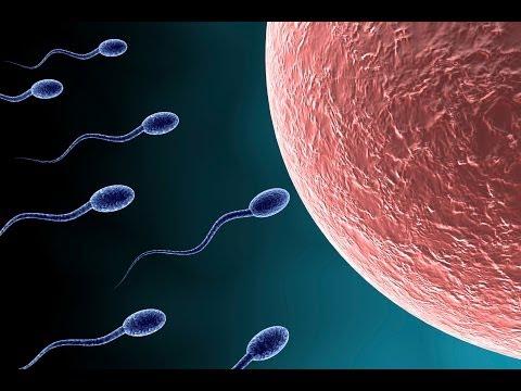 Những điều thú vị về tinh trùng