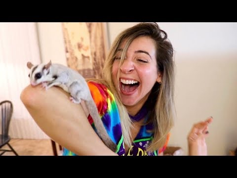 SURPRISING HER WITH BABY SUGAR GLIDER