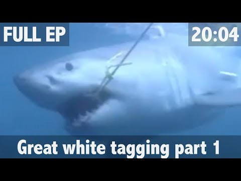 ULTIMATE FISHING - The Search for the Great White Shark