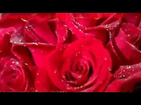 Dịch Vụ Điện Hoa Hà Nội - Cách Bó Hoa Hồng Đẹp, Shop hoa tươi
