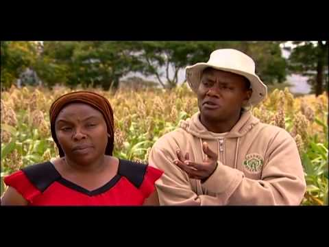 Shamba Shape Up (English) - East Coast Fever, Planting Trees, Sorghum Thumbnail