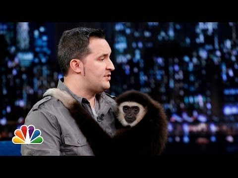 Jeff Musial: Otters, Gibbon and Water Buffalo, Part 2 (Late Night with Jimmy Fallon)